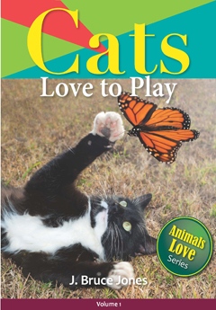 cats love to play, children's picture book